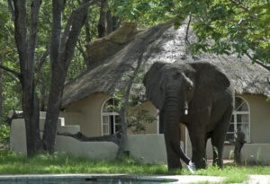 Sable Sands Safaris Lodge